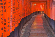 Torii Walkway, Japan Wallpaper Mural