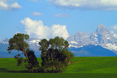 Trees And Tetons Wall Mural