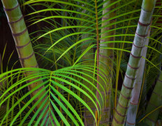 Tropical Ferns Mural Wallpaper