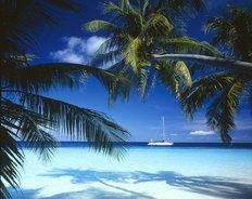 Tropical Ocean With Palm Trees And Sailboat Mural Wallpaper