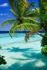 Tropical Paradise At Maldives With Palms And Blue Sky Wallpaper Mural