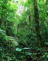 Rainforest Overgrowth Wallpaper Mural