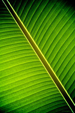 Tropical Shade Wallpaper Mural