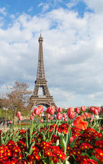 Tulips And Eiffel Tower Wall Mural