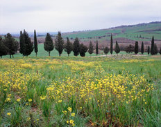 Tuscan Countryside Outside Pienza, Italy Mural Wallpaper