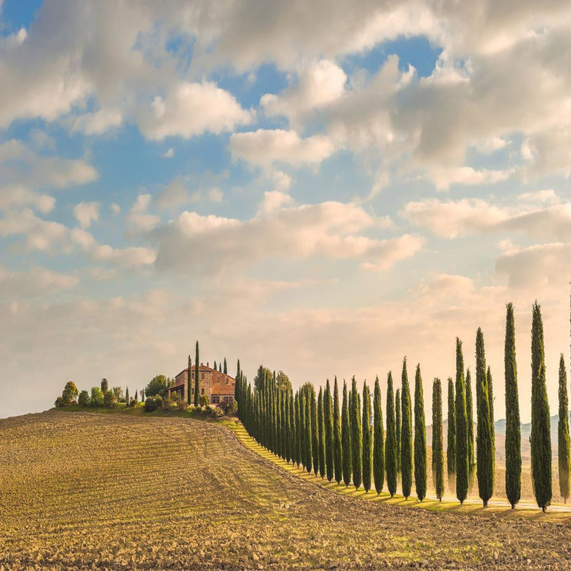 Tuscan landscape shows a row of cypress trees leading to a building on top of a hill