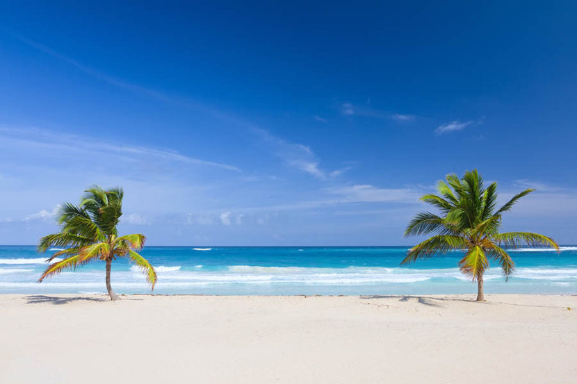 Two Palm Trees on Beach Punta Cana Wallpaper Mural