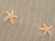 Two Starfish Mural Wallpaper