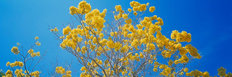 Vibrant Yellow Tree Wall Mural
