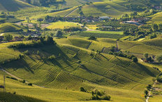 The Vineyards of Langhe Wallpaper Mural