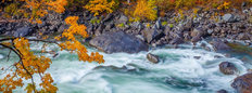 Wenatchee River in Autumn Wall Mural