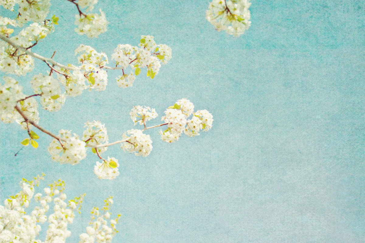 White Blossoms Wallpaper Mural
