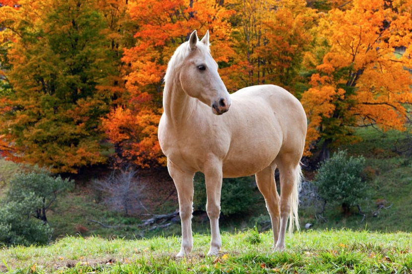 White Horse In Autumn Wall Mural