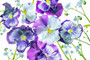 Wooping purple whiskers and blue Water Forget Me Not arrangement.