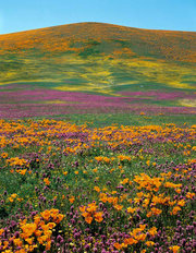 Wildflower Splendor Mural Wallpaper