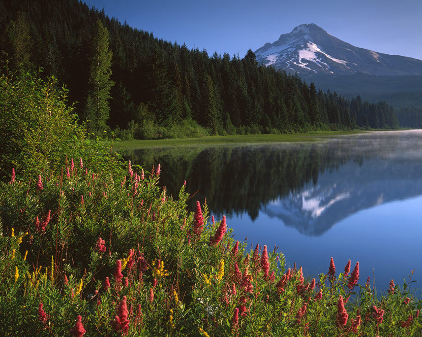 Wildflowers and Reflections Wall Mural