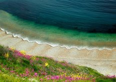 Wildflowers And Waves Wall Mural