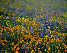 Wildflowers Galore Mural Wallpaper