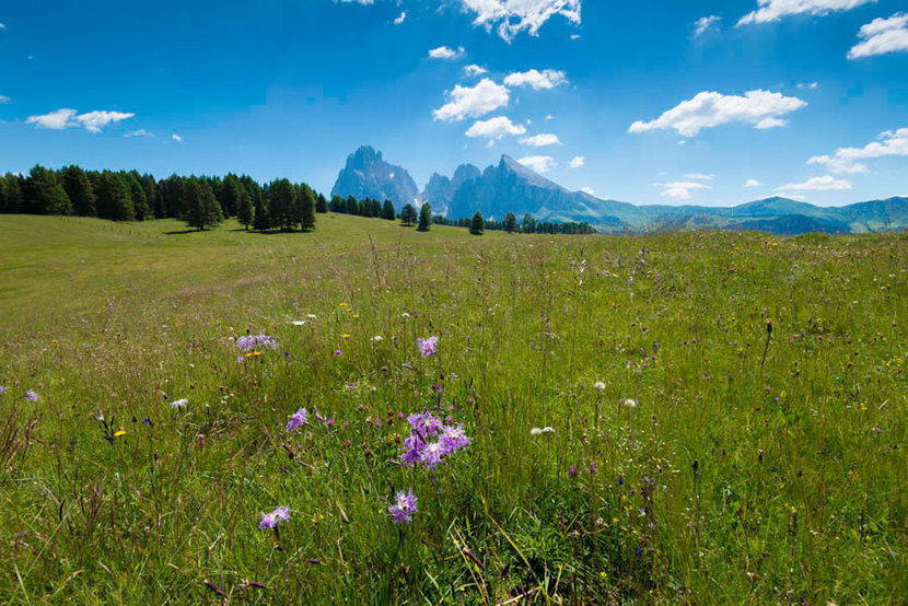 Wildflowers in the Seiser Alm Wallpaper Mural