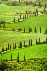 Winding Tuscan Road Wallpaper Mural