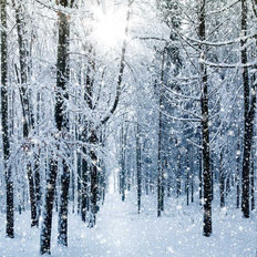 Snowy Winter Forest Mural Wallpaper