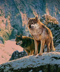 Wolfs in Sunset Wall Mural