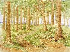Woodland Glade Wallpaper Mural