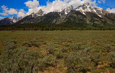 Wyoming Grand Tetons Wall Mural