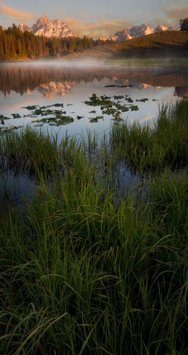 Wyoming Lillypad Pond In The Morning Wall Mural
